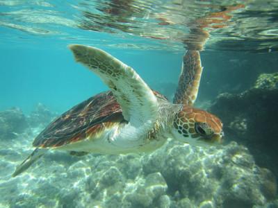 Snorkling in Tahiti - photo by MironCaro