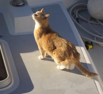 cat on boat